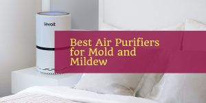 Best Air Purifiers for Mold and Mildew
