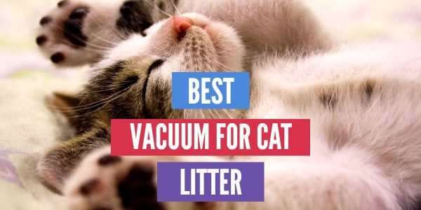 5 Best Vacuum for Cat Litter – [Get Rid of Cat Litter]